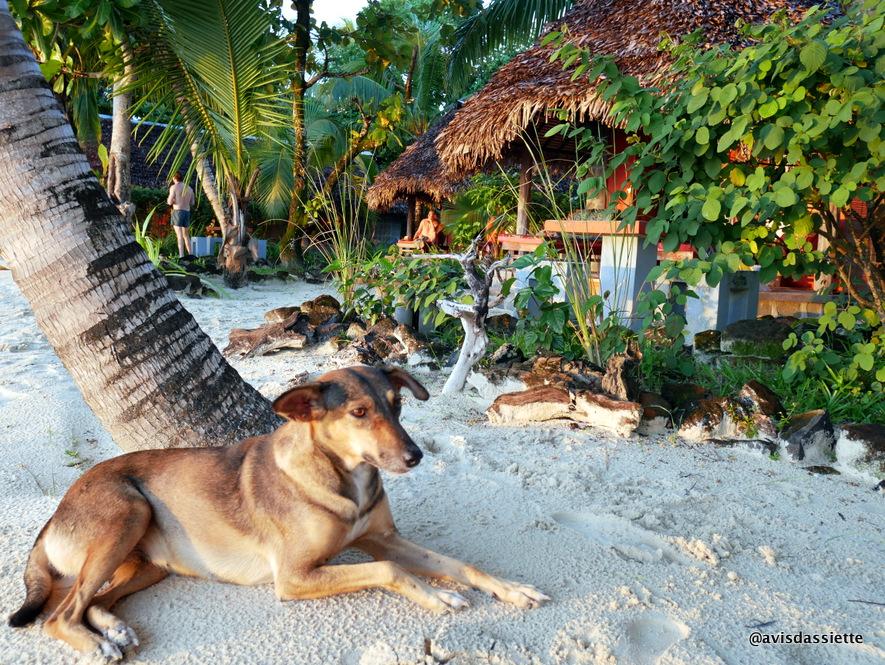 sambatra beach lodge voyage ile aux nattes madagascar winnie